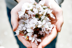 Two hands holding white blossoms